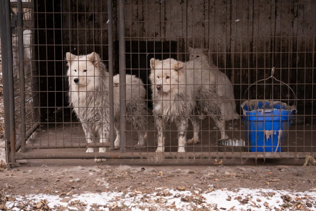 Nearly 170 dogs rescued from 'appalling' conditions at puppy mill