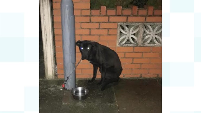 Terrified pup left chained to lamppost in freezing cold