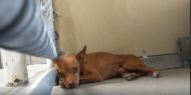 Pining away quietly, can someone save sad Nolan from shelter