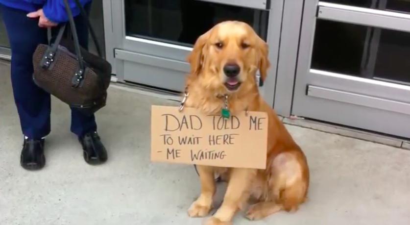 Faithful Dog Won't Stop Waiting For Owner