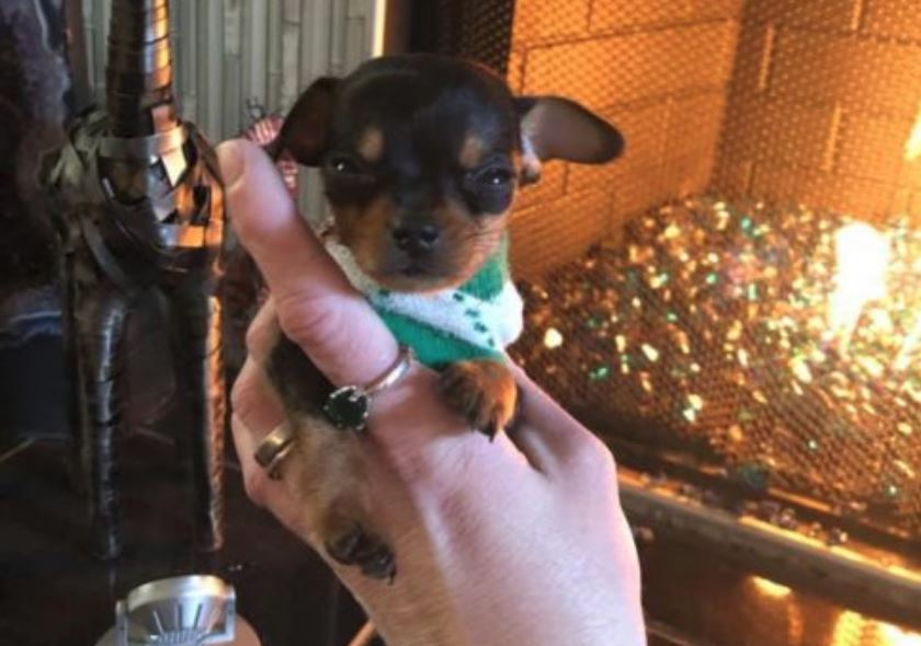 One-pound puppy Rico continues to make strides in recovery