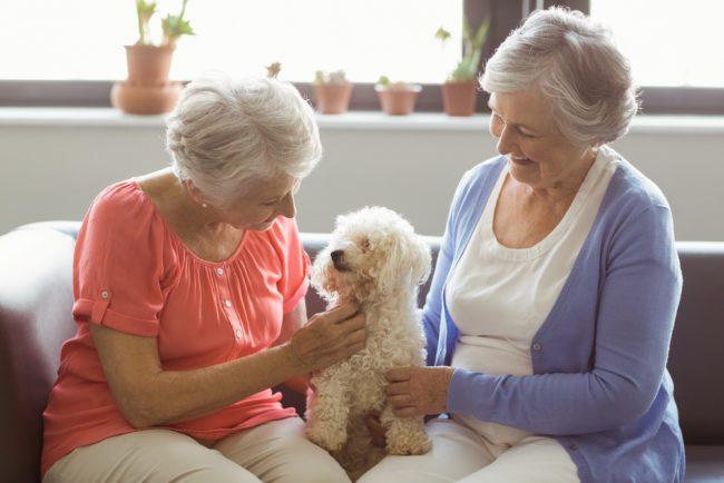 Love a senior dog in 'Seniors for Seniors Foster Program'