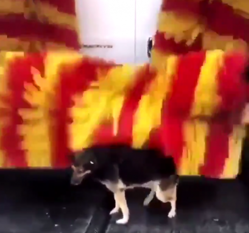 Every Day, Stray Visits The Car Wash To Use Their 'Petting Machine'