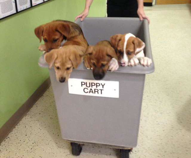 This Shelter Has A 'Puppy Cart,' And It's Doing Wonders For Their Dogs