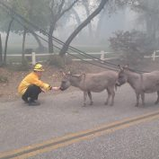 Exhausted firefighters rescue scared donkeys in act of kindness