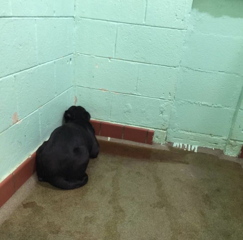 Shelter Dog Frozen In Fear Won't Turn Around