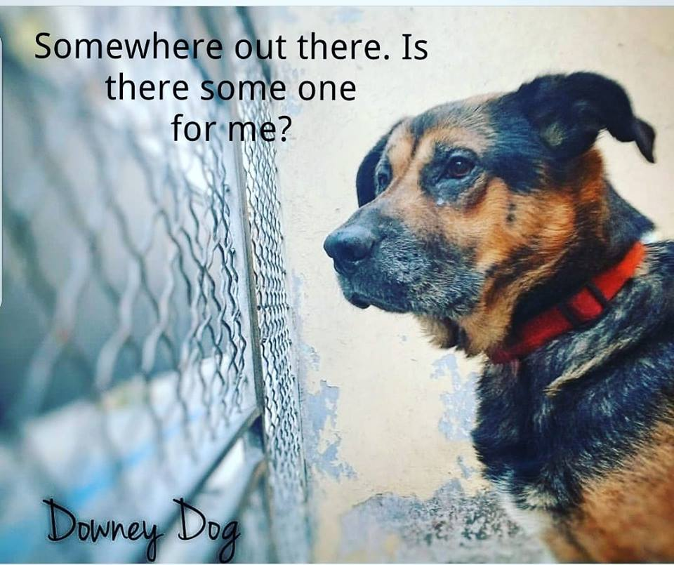 Is there anyone out there who will love this soulful dog?