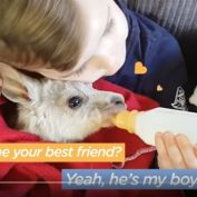 Boy And His Baby Kangaroo Are Inseparable