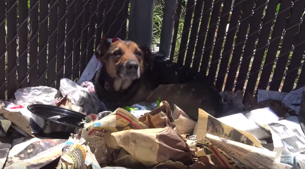 Dog Found Not Moving On Pile Of Trash, And Rescuers Fear Something's Wrong