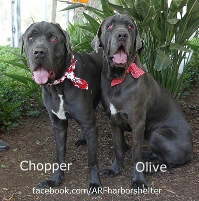 Olive and Chopper: Best buds whose owner never came back