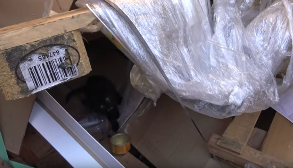 Hope For Paws going dumpster diving to save kittens thrown like trash