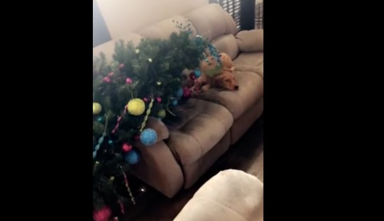 Guilty puppy pulls down entire Christmas tree