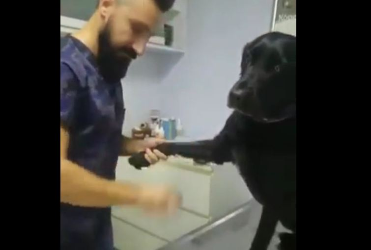 Dog getting a shot at vet's office is the best patient ever!