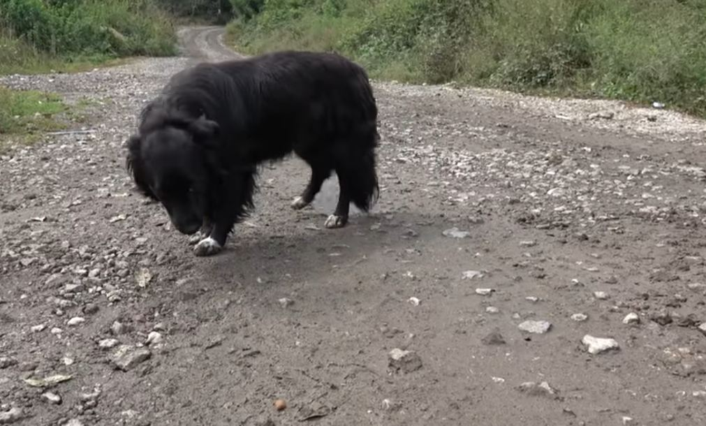 Dog Too Scared To Let Us Save Her, Hides In The Woods