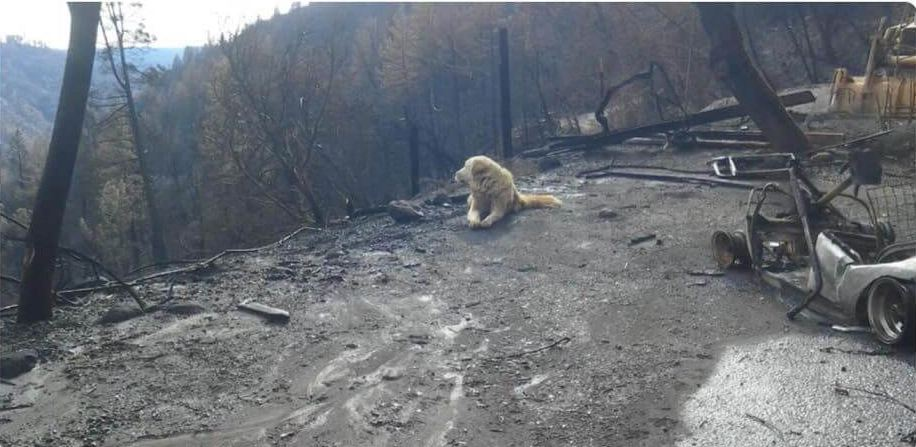 Faithful dog waited for family after their home burned to the ground