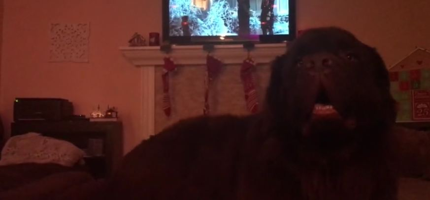 Newfoundland makes enjoying Christmas movie impossible