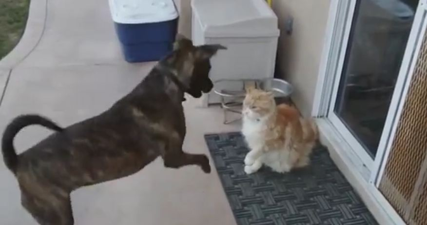 Cat Shows Extreme Dose Of Patience With Energetic Dog