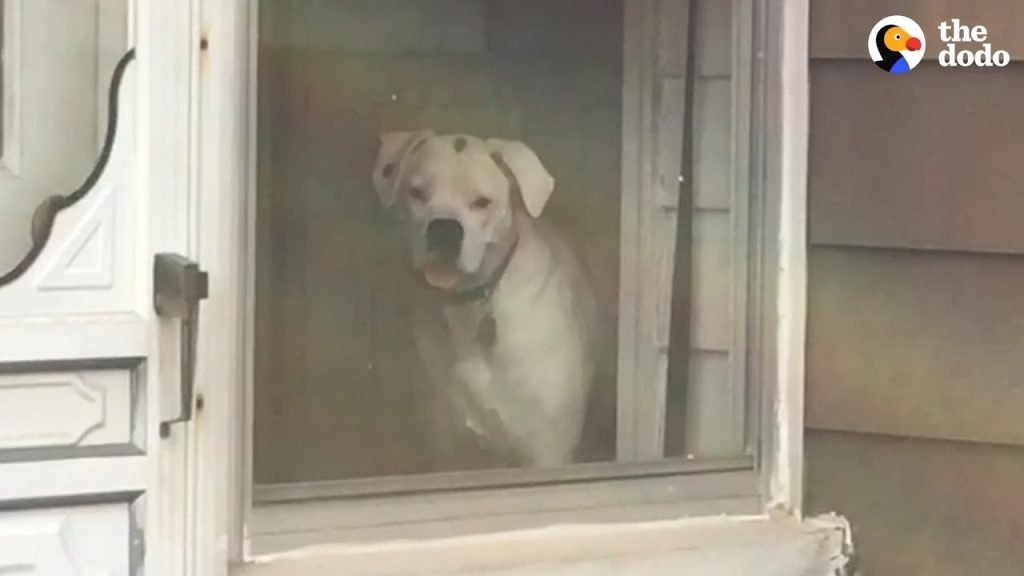 Dog Stalks His Owner From Every Window