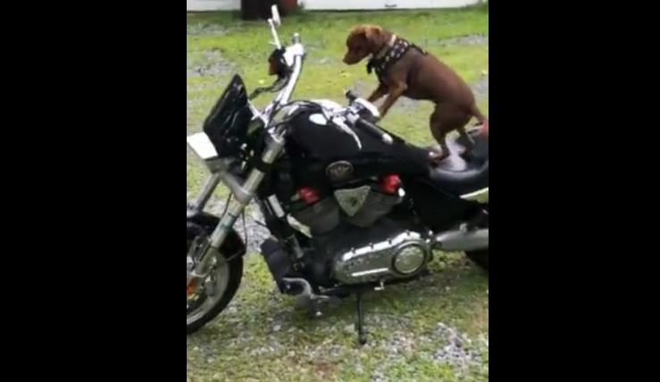 Dog is Ready to Ride