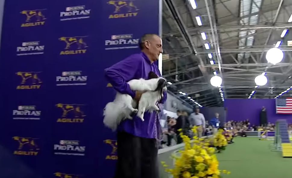 The Best of the 2018 Masters Agility Championships | WESTMINSTER DOG SHOW (2018)