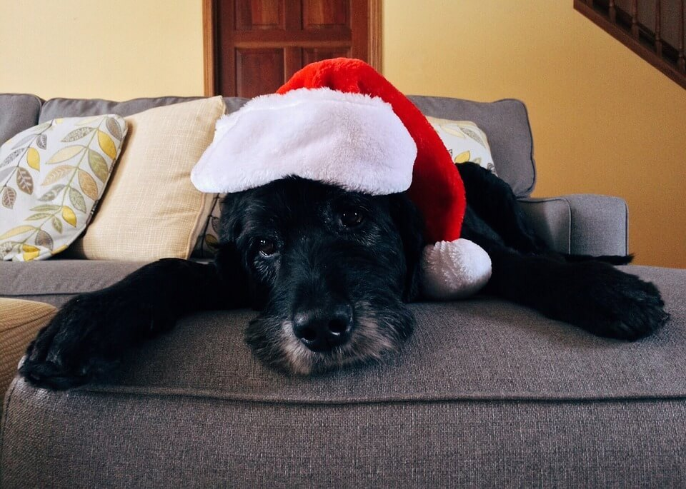 Holiday shopping? Don't forget homeless shelter pets
