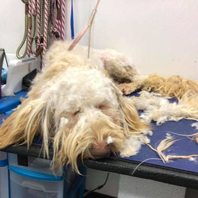 Labradoodles Rescued From Puppy Mill So Happy to Get a Bath