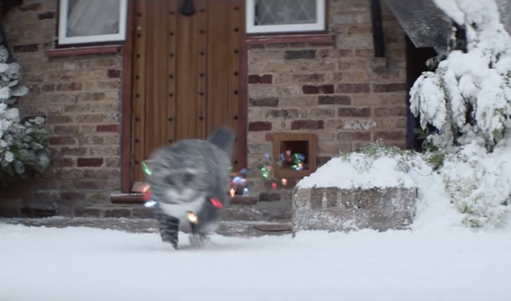 Cat's Series Of Unfortunate Events Comes Full Circle To Save Family's Christmas