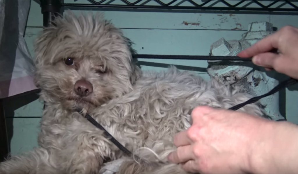 Homeless Dog Finds His Way Into Someone's Garage To Hide From The World
