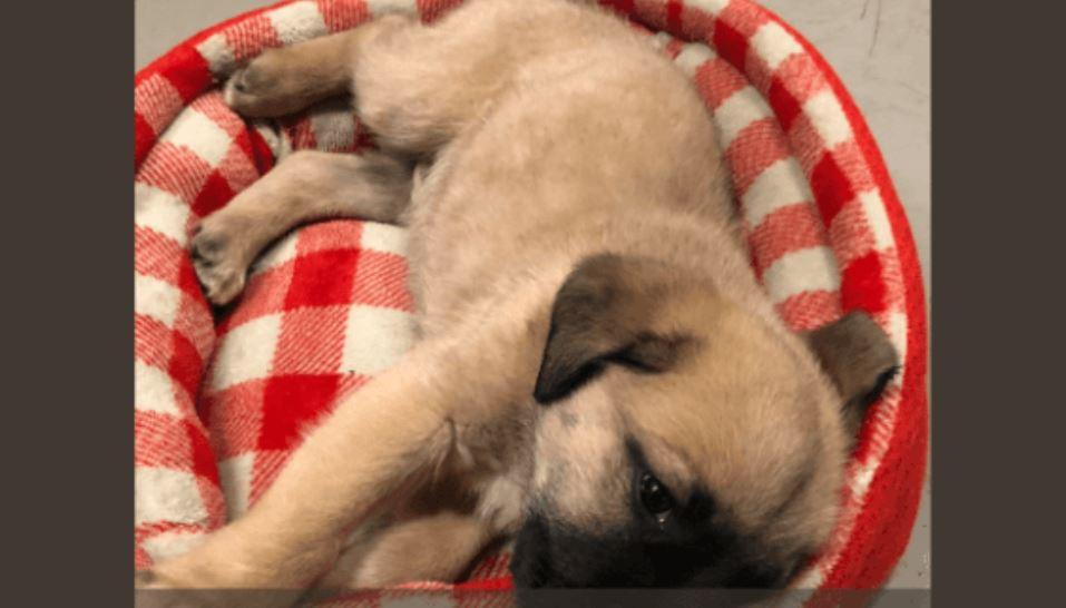 Good Samaritan found injured puppy on the interstate