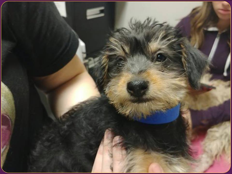 Shelter pleads for help after puppy stolen from adoption center