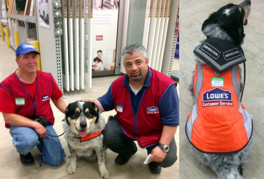 No One Would Hire This Man With A Service Dog, So One Store Hired Them Both