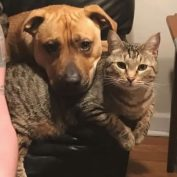 Awesome Dog And Cat Friendships That Help Make The World Go 'Round