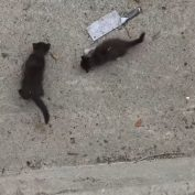 S.O.S: Two kittens stranded down in the L.A river with a big storm approaching!!!