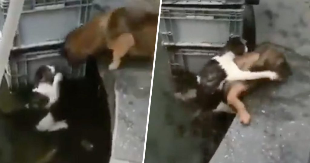 Dog Rescues Cat From Drowning In Heartwarming Video