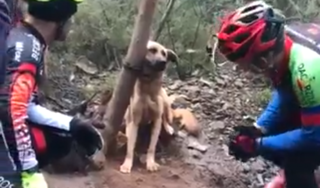 Cyclists Stop To Save Dog Found Tied Tightly To A Tree In The Forest