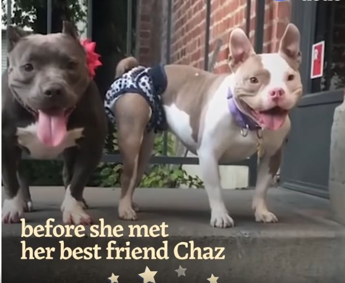 These Pitties Rescued Each Other