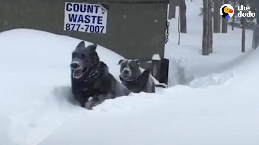 Why Everyone Needs 2 Dogs
