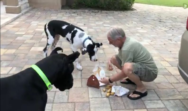 Great Dane Delivery Training Doesn't Go As Planned