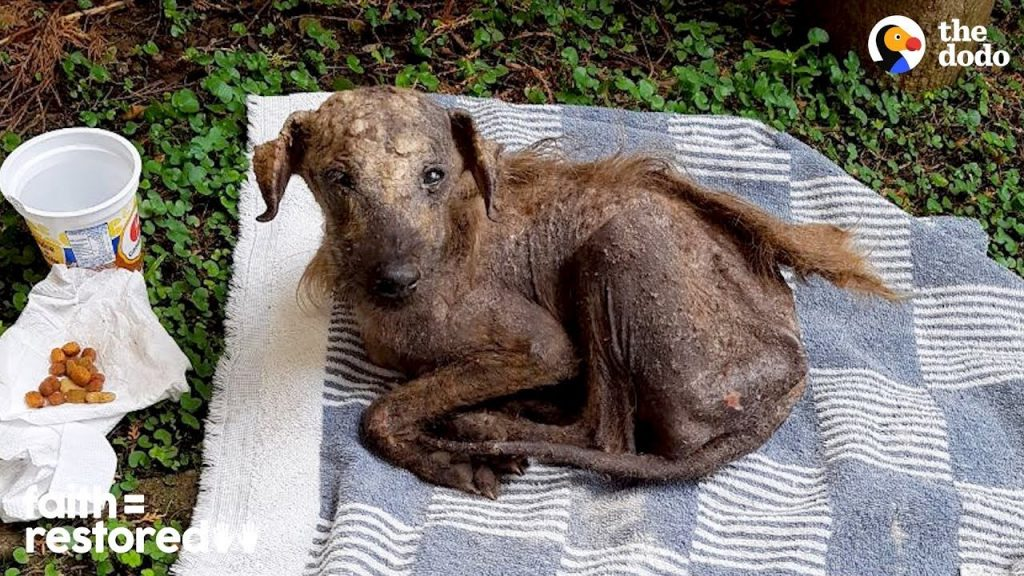 Rescued Street Dog Is Unrecognizable Now