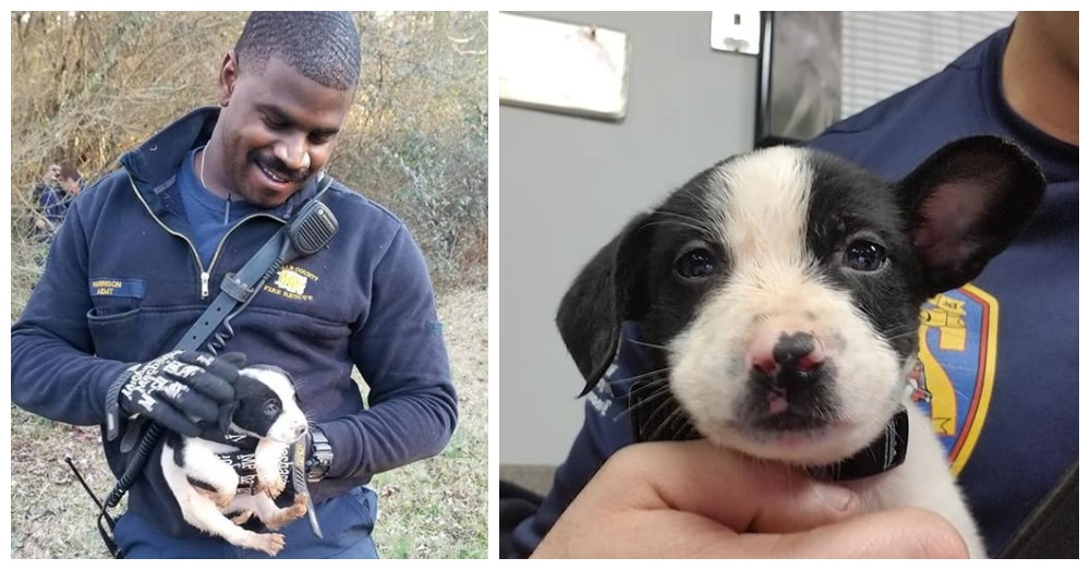 Georgia Firefighter Rescues Puppy Then Adopts Him