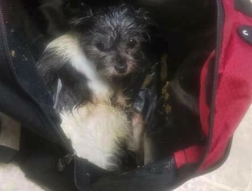 Dog found abandoned along a road in a backpack