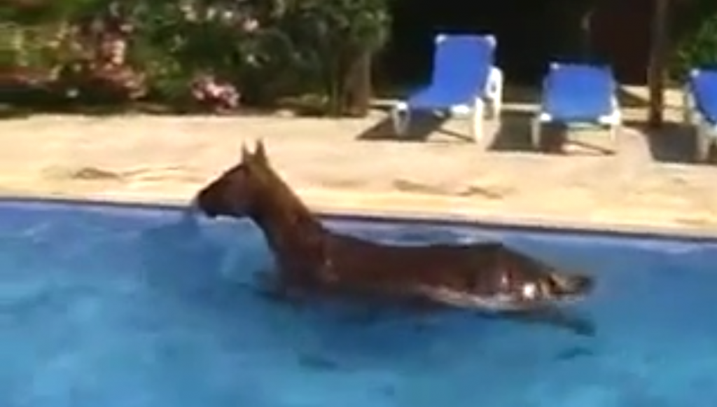 Man Sees Horse In The Pool, And The Graceful Swim Proves It Wasn't Its First Time