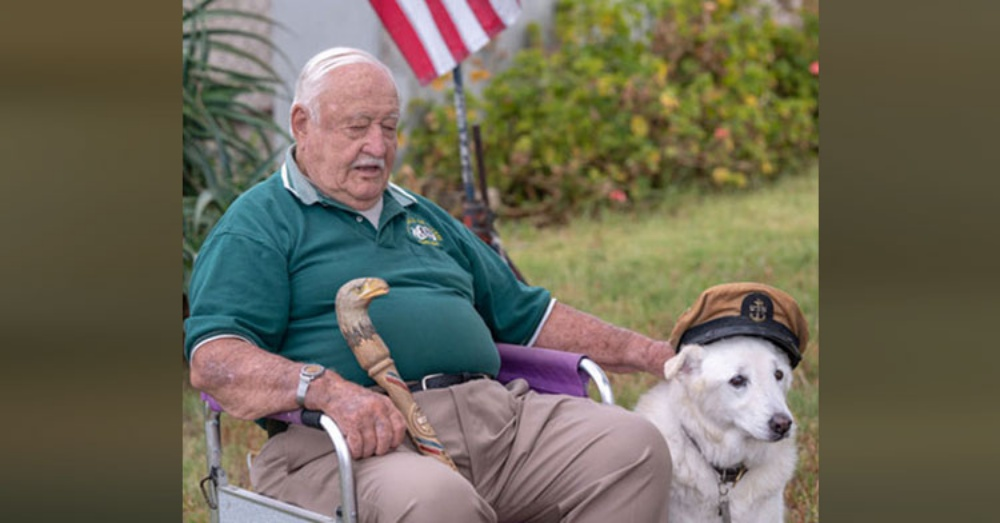 Veteran Found Out Senior Dog Was Days From Euthanization & Begs To Bring Him Home.