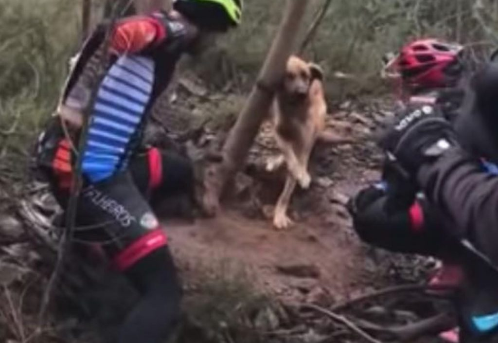 Cyclists Save Dog Tied Tightly to Tree and Left to Die