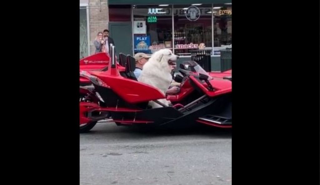 Totally Chill Dog Goes for Ride in Exotic Super Car