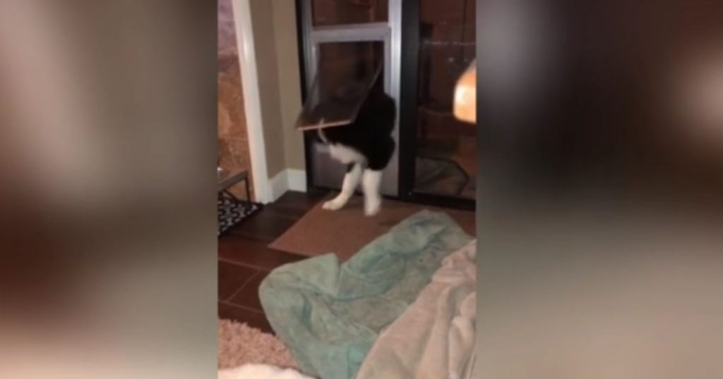 Determined pup drags his bed through doggy door