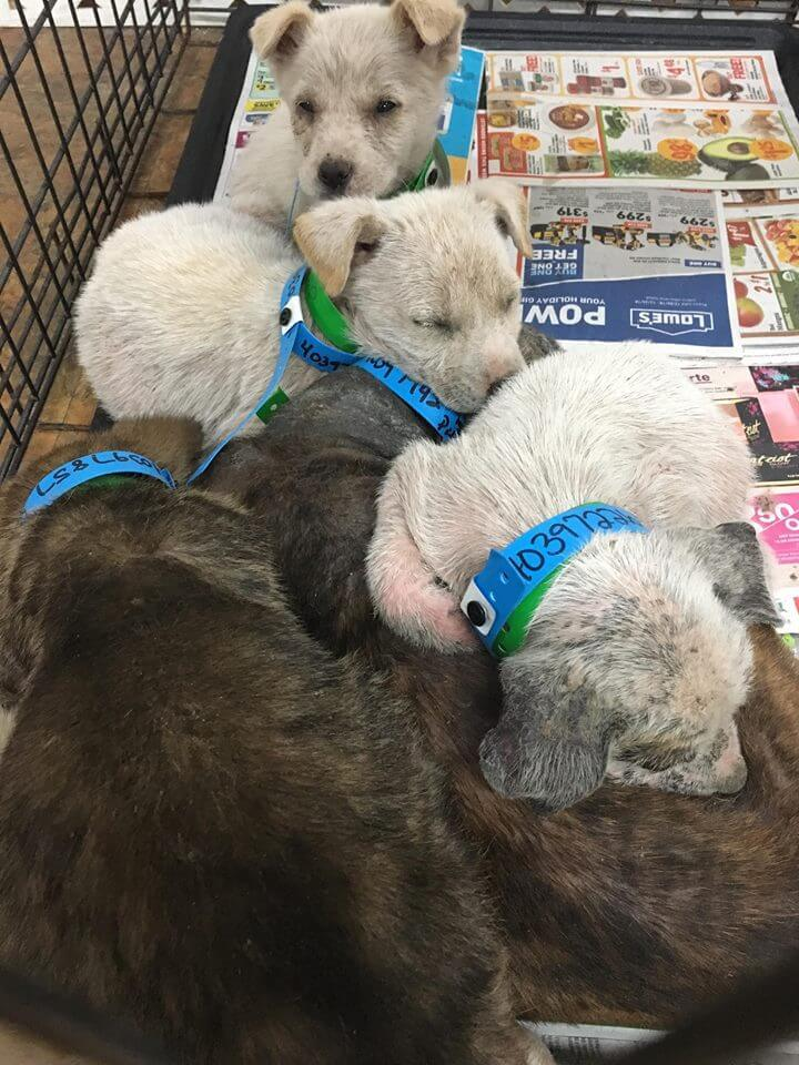 California bans sale of puppy-mill dogs, cats and rabbits in pet stores