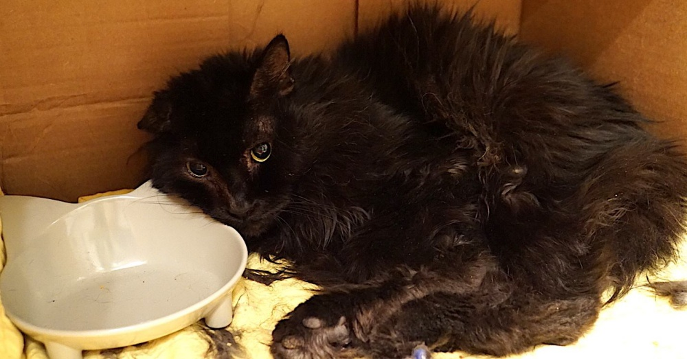 Cat Suffered With Shattered Leg At Shelter
