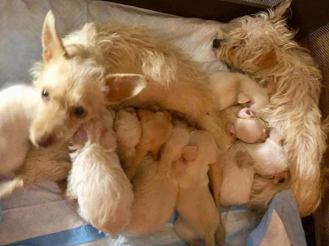 Two Homeless Mother Dogs Found Nursing Puppies Together In Alley