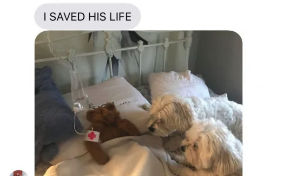 Dogs Leave Their Toy Out In The Rain, Dad Stops At Nothing To Save It